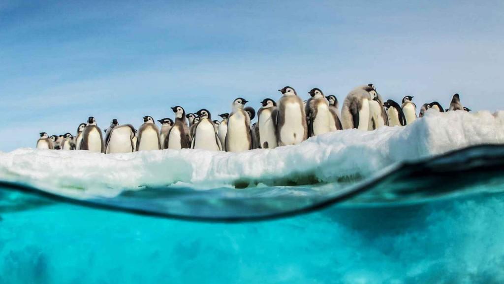 la marcia dei pinguini – Il richiamo 02
